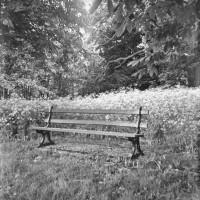 Cemetery bench