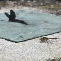 Dragonfly on a sundial